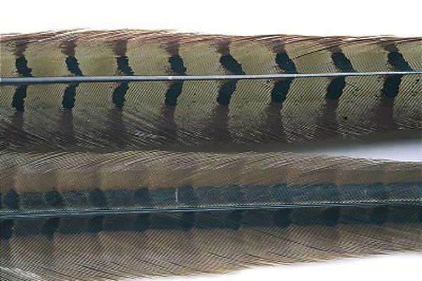 Bild på Fasantupp mittre stjärtfjäder