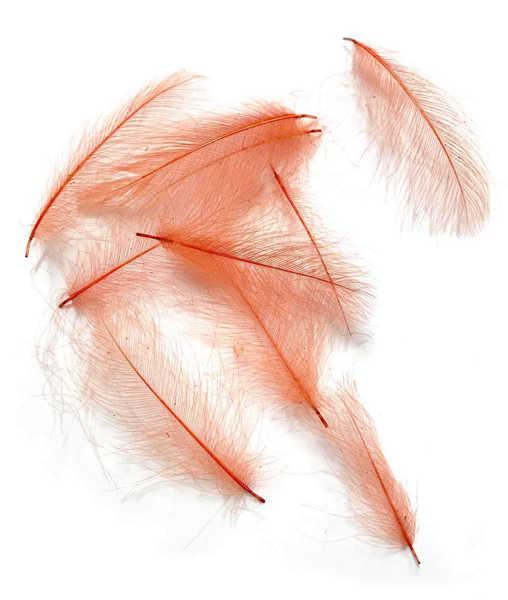 Bild på Swiss CDC Feathers Ultra Select XL