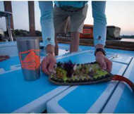 Bild på Fishpond Sushi Roll XL