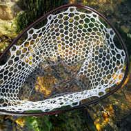 Bild på Sunshine Stealth Carbon Fiber Landing Net Small